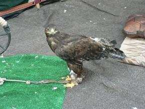 2012-Spanien-fågel1