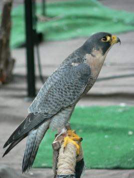 2012-Spanien-fågel5